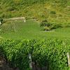 Marche Nordique dans les Vignes de Savoie